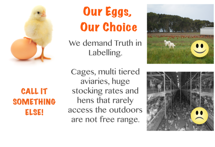 our eggs postcard