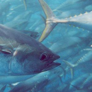 aquaculture_300