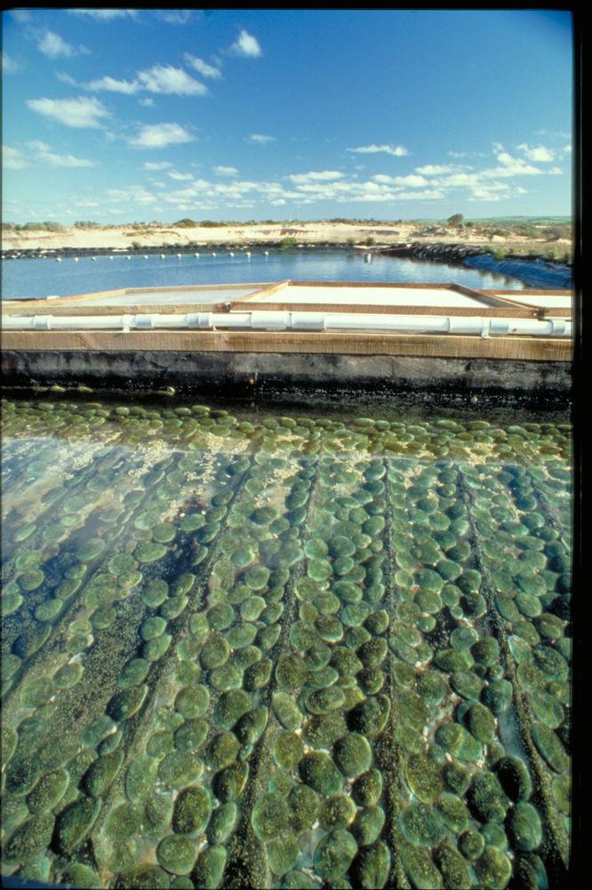 nEO_IMG_abalone tanks