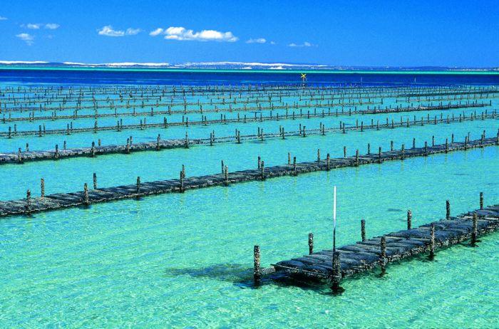 nEO_IMG_Coffin Bay oyster farm racks